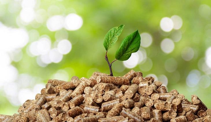 Czysta energia – Biomasa