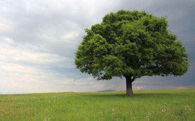 Drzewo z bliska