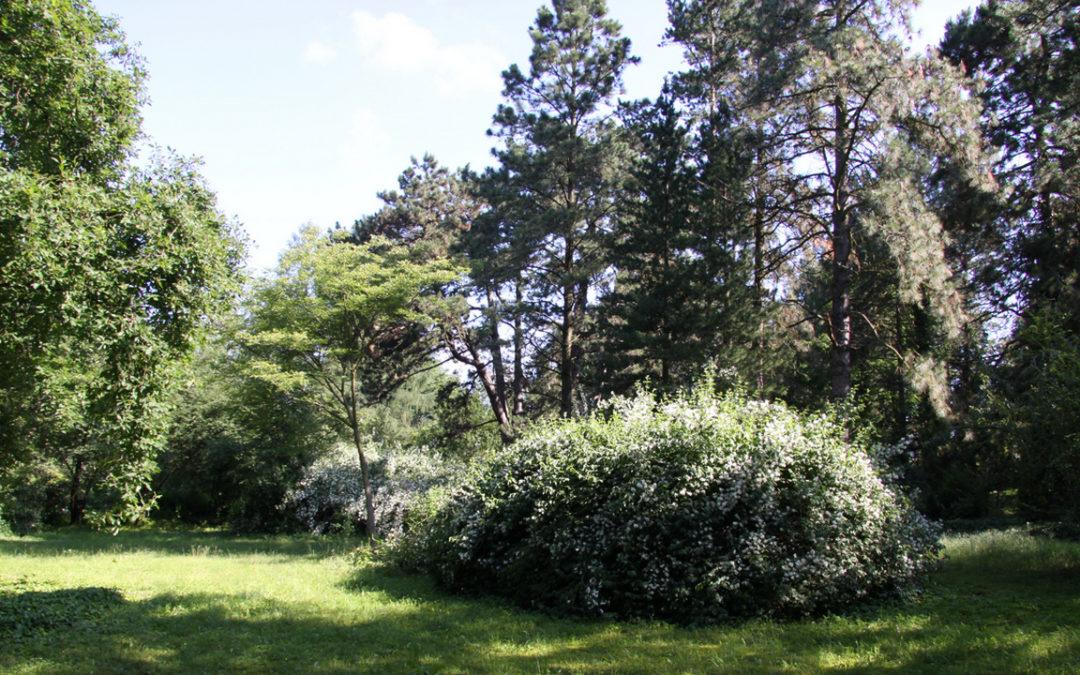 Park Zamku Kórnickiego – najważniejsze polskie Arboretum